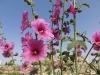 Flowers in Nazareth