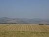 Fields of Upper Galilee